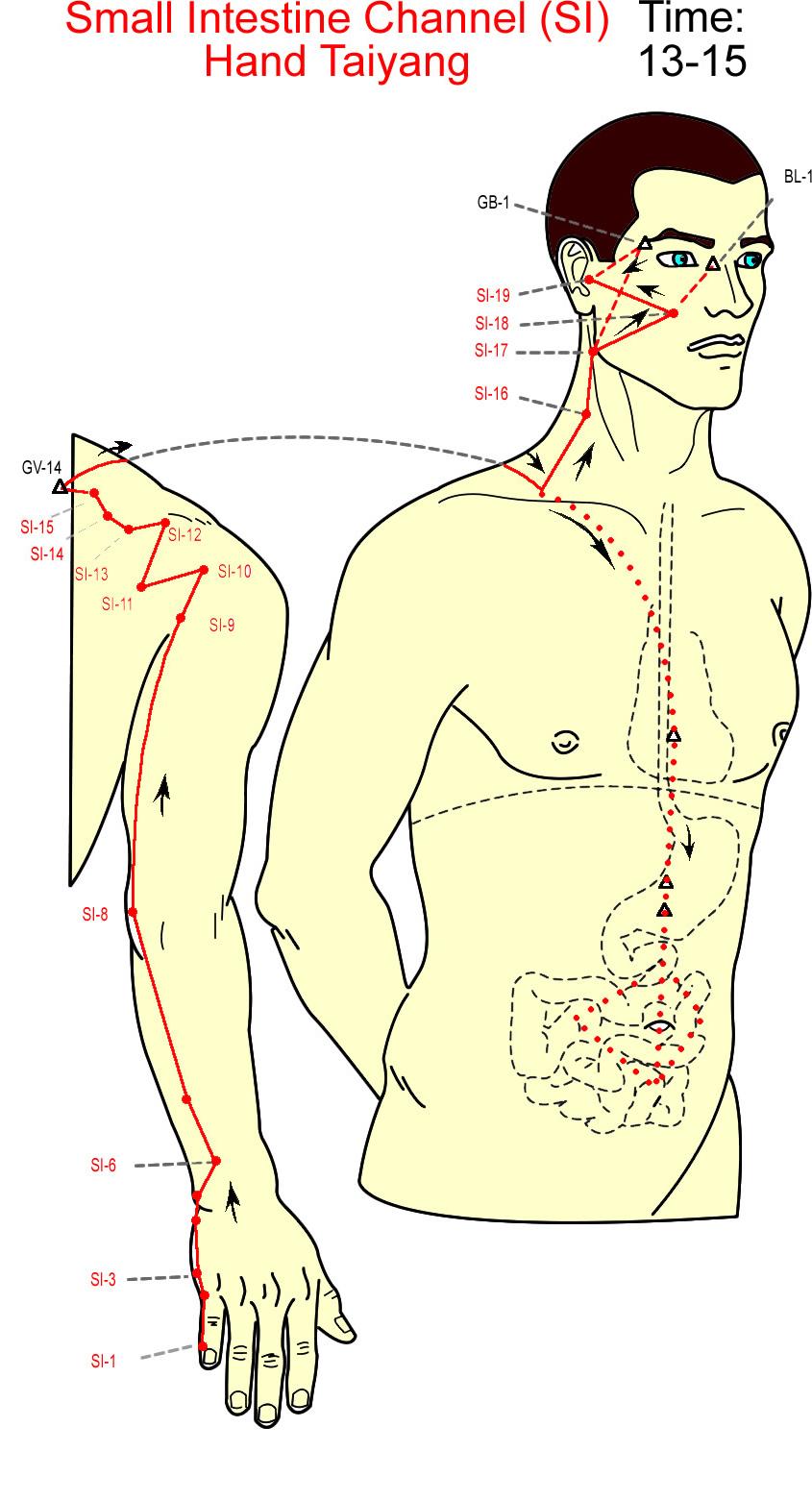 meridian usus kecil - small intestine