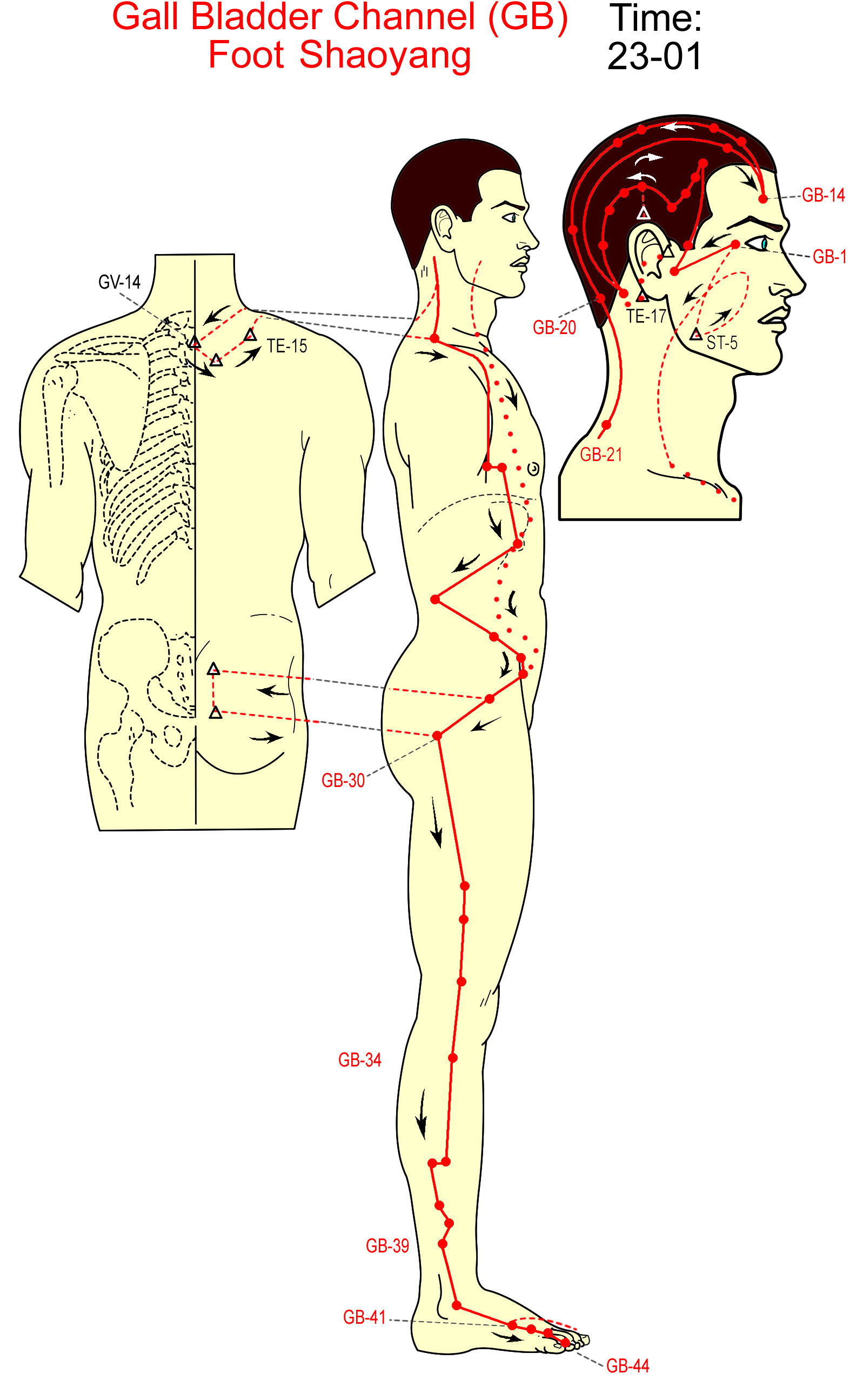 meridian kandung empedu - gall bladder