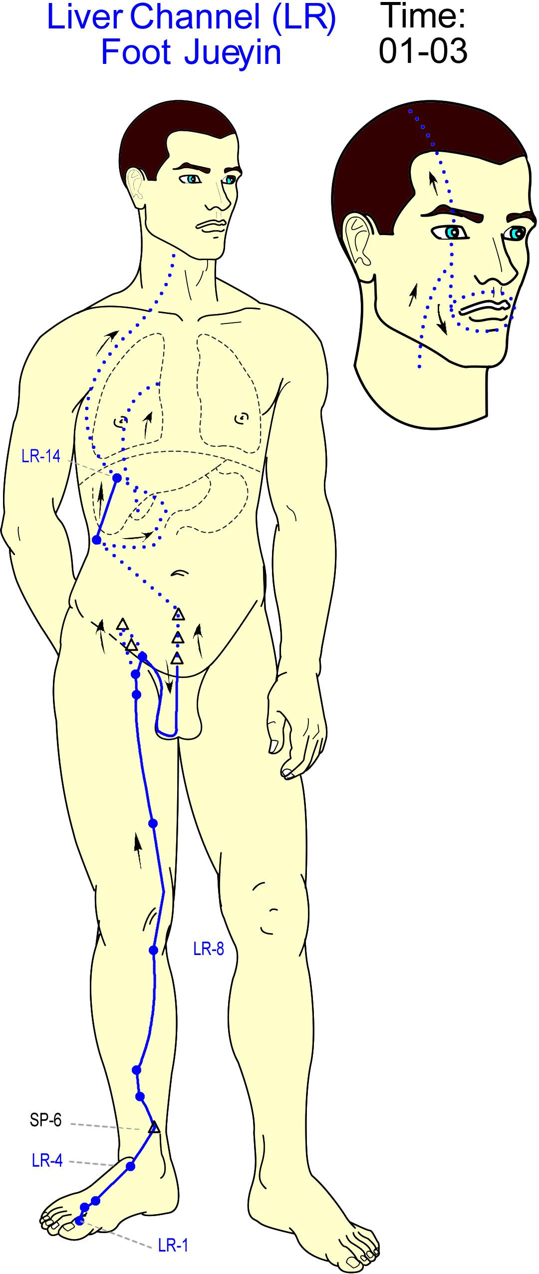 meridian hati - liver